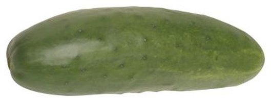 Cucumbers reach maturity in the hot, summer season.