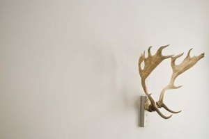 Antlers add a rustic, outdoor theme to any decor.