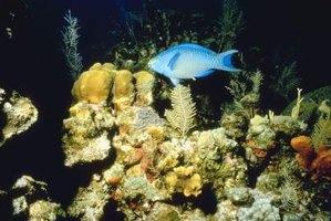 White hair algae in saltwater aquariums ehow for White algae in fish tank
