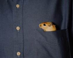 "Small in size, gerbils are sometimes called ""pocket pets."""