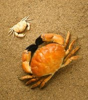 Crabs, lobsters, shrimps, insects and arachnids are Arthropods.