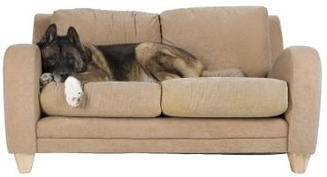 The Hoover Steam Vac Jr. removes pet hair and stains from upholstered couches.