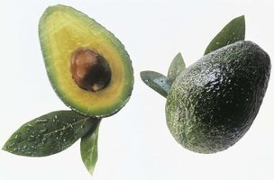 Fruits from a Wurtz avocado tree are dark green and medium-sized.