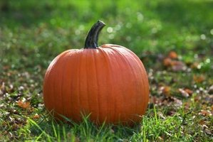 Choose perfect pumpkins for your recipes and fall decor.