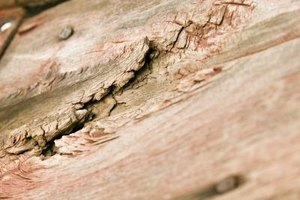 Left untreated, damage from powderpost beetles can weaken or destroy wood structures.