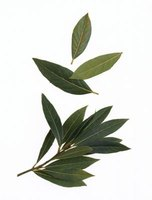 Try using bay leaves as a natural pest repellent.