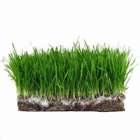 Buy sod designed for your climate and soil conditions for best results.
