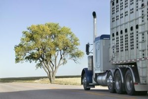 Bull haulers must receive special training in the management of cattle.