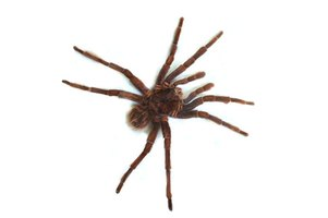 Spiders are often seen in homes.