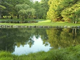 Depth of a pond is dependent on several factors.