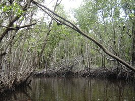 The Everglades is just one of many great vacation spots on the east coast.