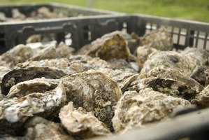 How to Roast Oysters With a Gas Grill
