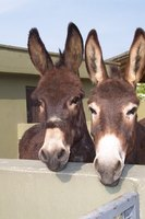 Donkeys need sheltering from wind and rain.