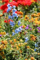 Flowers of assorted colors and heights complement each other in the garden.