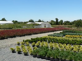 Landscaping businesses utilize plant nurseries for project supplies.