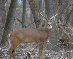 Deer blinds improve your chances of having a successful hunt.