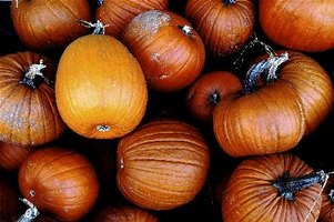 Pumpkins come in various sizes, shapes and textures.