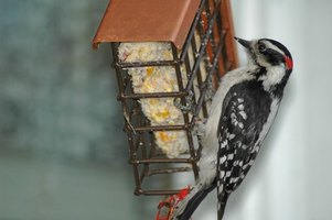 Some woodpeckers enjoy pecking away at homes.