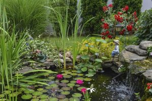 Ponds are good in fairy gardens.