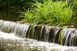 Close-up of sedge grass on top of fountain waterfall.