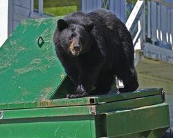 Large containers that a bear can't tip over are the safest.