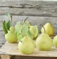 Once fully ripened, pears can be pureed for nectar.