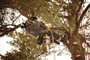 how to become a licensed arborist