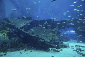 Shipwreck underneath the water.