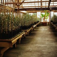 Hydroponics is a burgeoning industry, for both commercial and home gardeners alike.