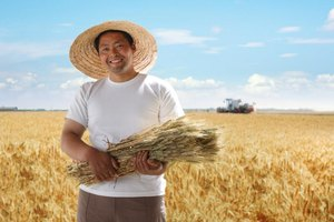 A farmer is holding wheat in his field.