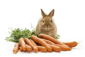 Despite the Bugs stereotype, carrots should be considered a treat in a bunny's diet.