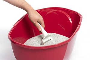 A woman is scooping out a litter box.