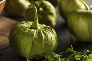 fresh tomatillos have a bright-green color and a tunic, or papery covering, that pulls away effortlessly.