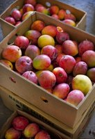 Mangoes may be eaten fresh, juiced, canned, dried or cooked.