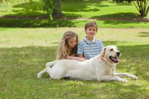 Dog lying on grass beside children