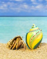 A painted shell is pretty, but potentially lethal for a hermit crab.