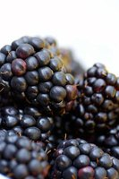 Use fresh black raspberries for the best syrup.