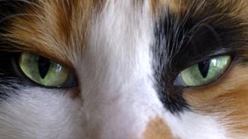 Cats Eyes Dilated After Surgery