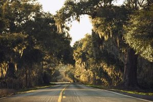 A rural road lined with live oak trees draped in Spanish moss.