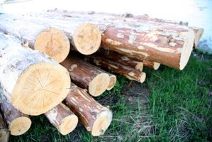 Determine the amount of lumber available in a tree before you cut it down.