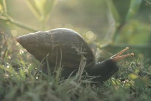 Garden snails have shells for protection, unlike your garden-variety earthworm.