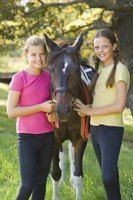 Earning a Horse Rider badge is a fun way to learn basic horse care and riding skills.