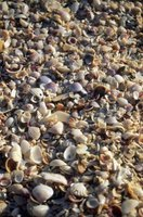 Sanibel and Captiva are known for their shelling opportunities.