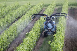 Insecticide being sprayed on plants