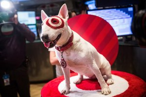 Bullseye, the canine mascot for Target, gets his photo taken.