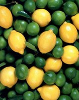 Lemons and limes are more cold-hardy than other types of citrus.
