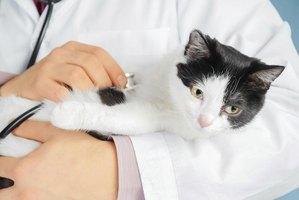 How Long Cat Clavamox