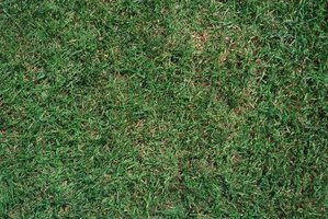What Is Carpet Grass?