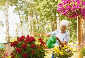 Mature woman watering plants.