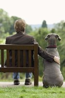 Dogs have an instinct to bond with one person.